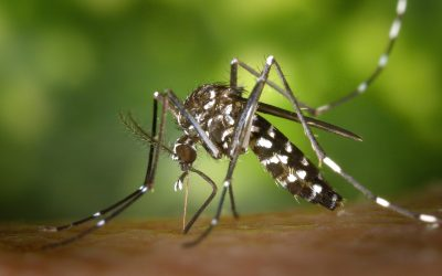 How do I Mosquito-Proof my Yard?